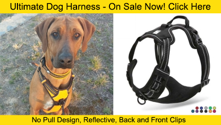 dog harness - can dogs eat outlet store